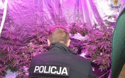 Hodowali marihuanę w wynajmowanym mieszkaniu. Jeden z nich był poszukiwany listem gończym